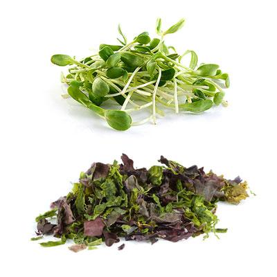 Cucina Vegana: germogli e alghe, una gamma di sapori unici