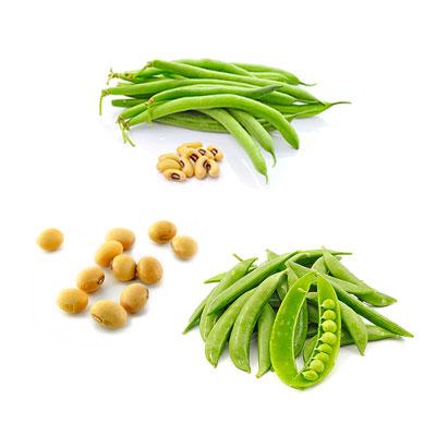 Cucina vegana: i legumi sono una vera e propria miniera nutrizionale